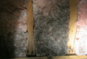 Mould In Loft And Roof