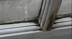 Image result for black mold on the window images