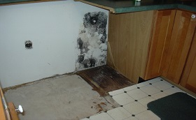 black mold in kitchen cabinets mould in kitchen causes and remedies 7893